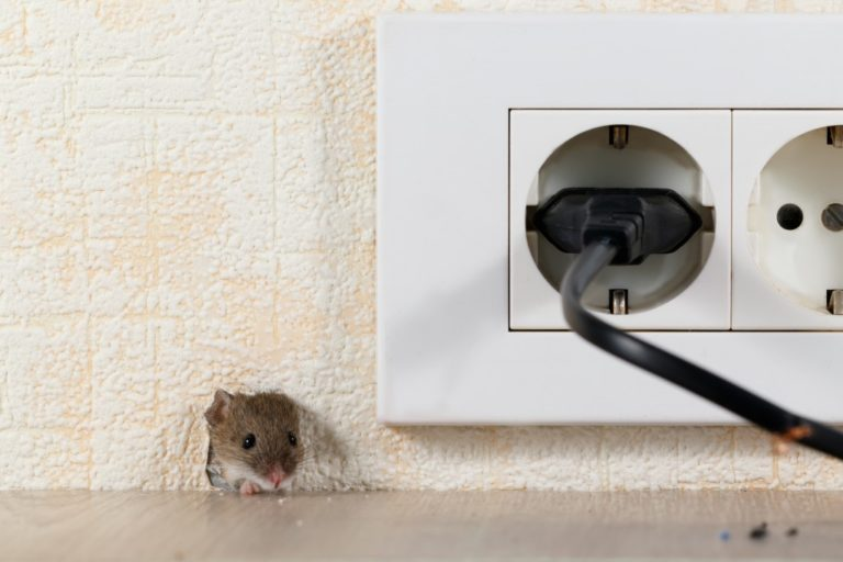 mice peeking in the hole of a wall near a socket