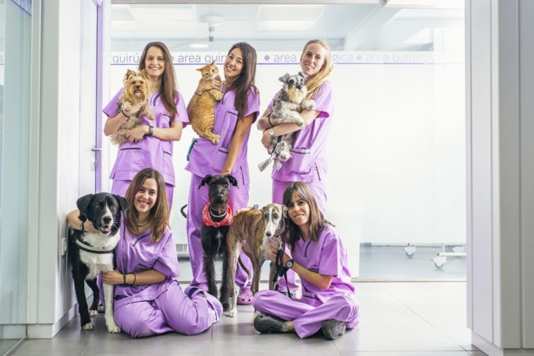 staff in the vet clinic